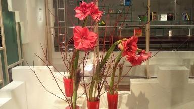 2011.10.27の花.jpg