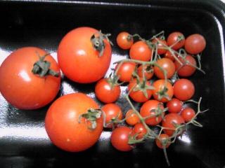マイクロミニトマト.jpg