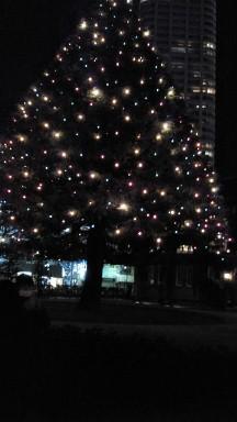 2011立教大学のクリスマスツリー.jpg