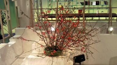 2012.04.12週の花.jpg