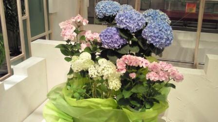 2012.06.28週の花.jpg