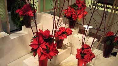 2012.12.13週の花.jpg