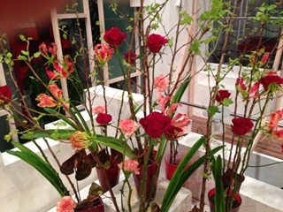 2013.03.21週の花.jpg