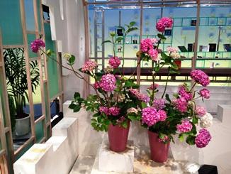 2013.06.20週の花.JPG