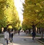東大歩道.JPG