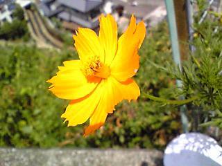 ガードレール沿いに咲いた花.JPG
