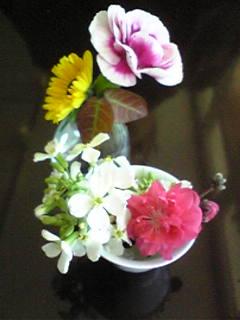 Belini花.jpg