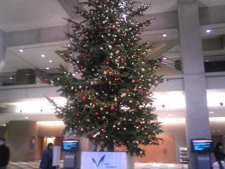 明治大学クリスマスツリー2009.JPG