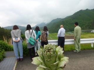 アーティチョークの花.JPG