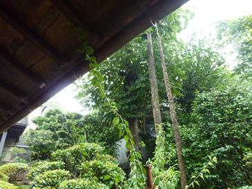 亀山社中で雨やどり.jpg