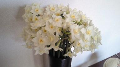 水仙の花束.jpg