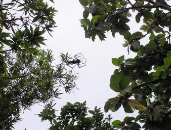 沖縄の大きな蜘蛛.jpg