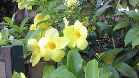 沖縄の花.jpg