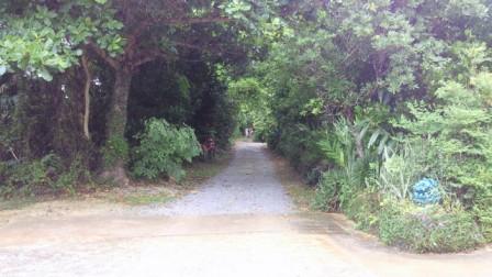 沖縄の道.jpg