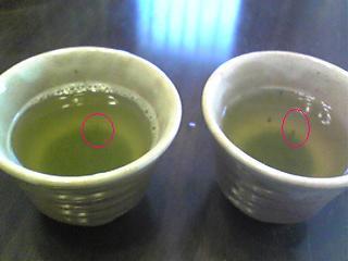 Wの茶柱.jpg